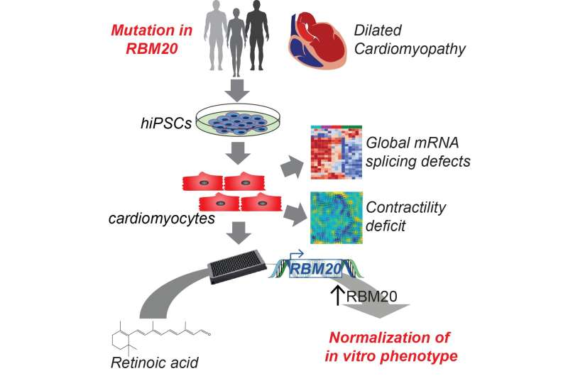 Using genetics and personalized medicine to treat cardiovascular disease