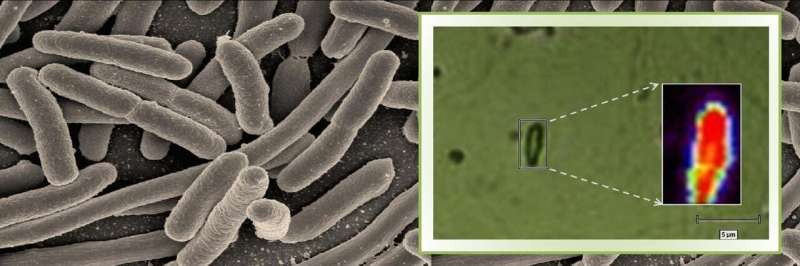 Using Raman microspectroscopy to rapidly detect disease-causing bacteria