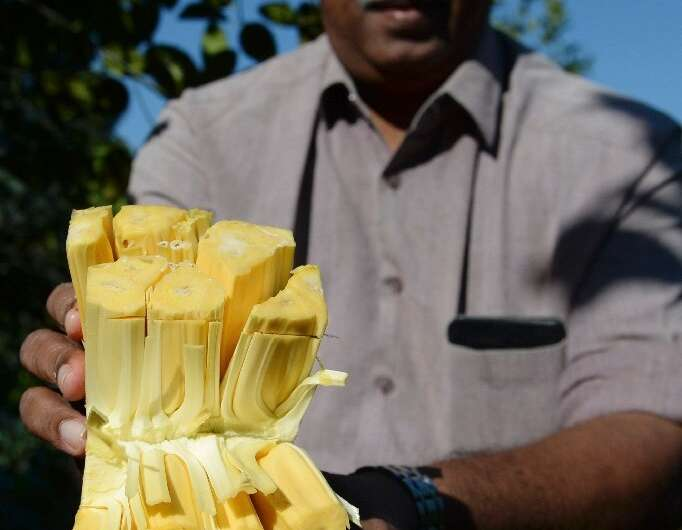 Varghese Tharakkan switched from selling rubber to jackfruit and has seen business boom