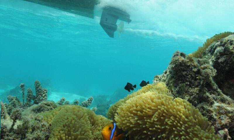 Vexing Nemo: Motorboat noise makes clownfish stressed and aggressive