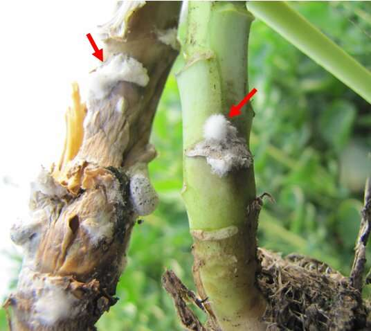 Virus turns deadly fungus from foe to friend in plants