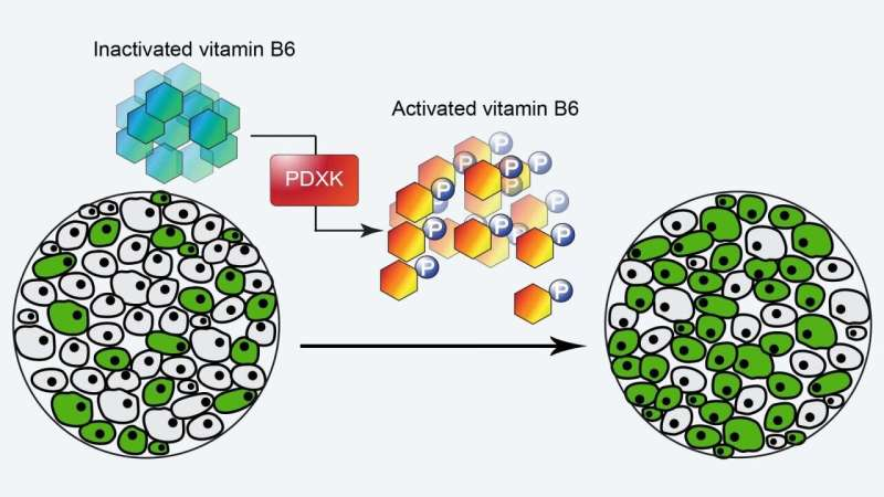 Vitamin B6, leukemia's deadly addiction