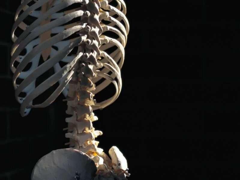 Vosoritide aids bone growth in children with dwarfism