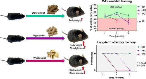 Western diet impairs odor-related learning and olfactory memory in mice