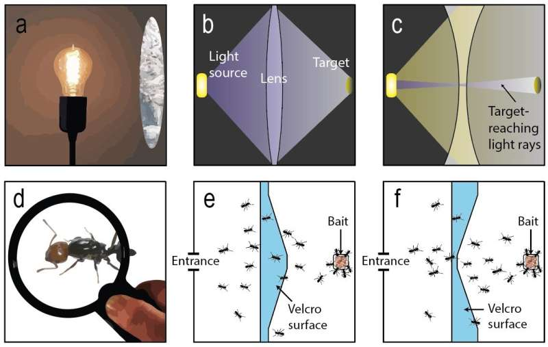What do ants and light rays have in common when they pass through lenses?