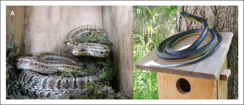 What information is coded in bird alarm calls -- a new study from Korea