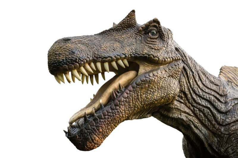 What we learned from dinosaur teeth in North Africa