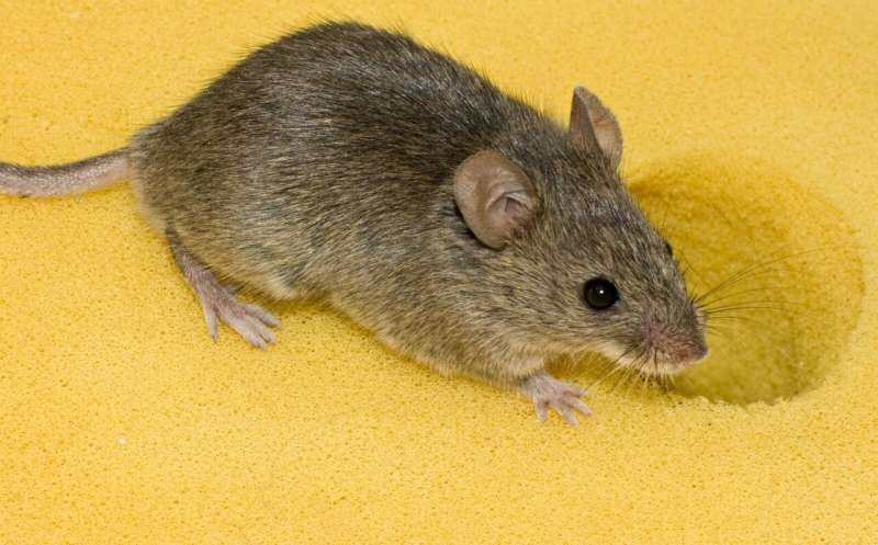 Wild animals allow new insights into the skin microbiome