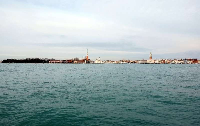With the boat traffic halted, marine species are being seen in the centre of the former city state for the first time
