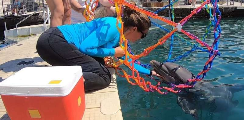 With the help of trained dolphins, our team of researchers is building a specialized drone to help us study dolphins in the wild