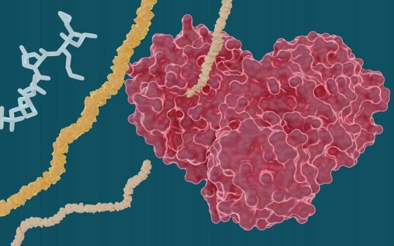 X-ray study explores potential of hepatitis C drugs to treat COVID-19