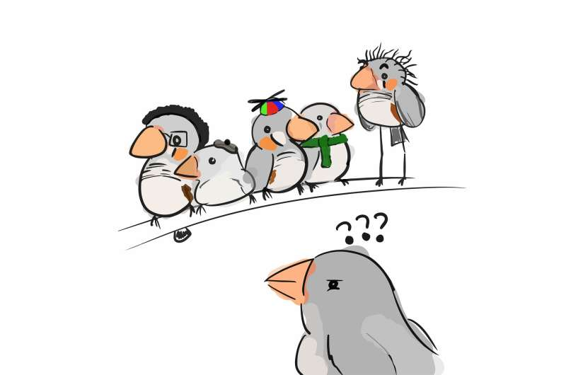 Zebra finches found able to remember up to 42 birds based on their vocalizations