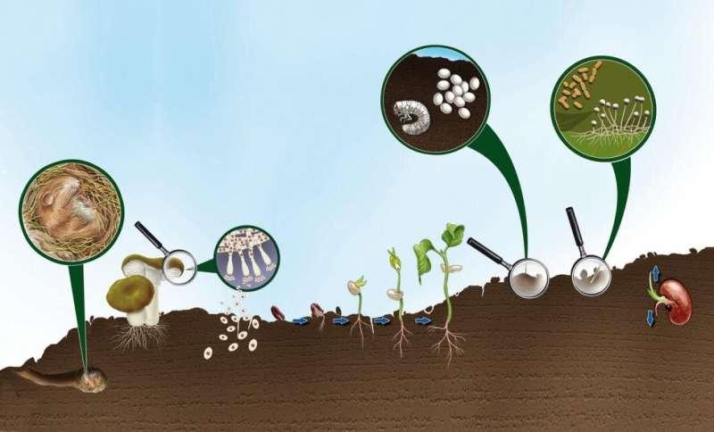 En camino hacia un suelo más saludable y sostenible