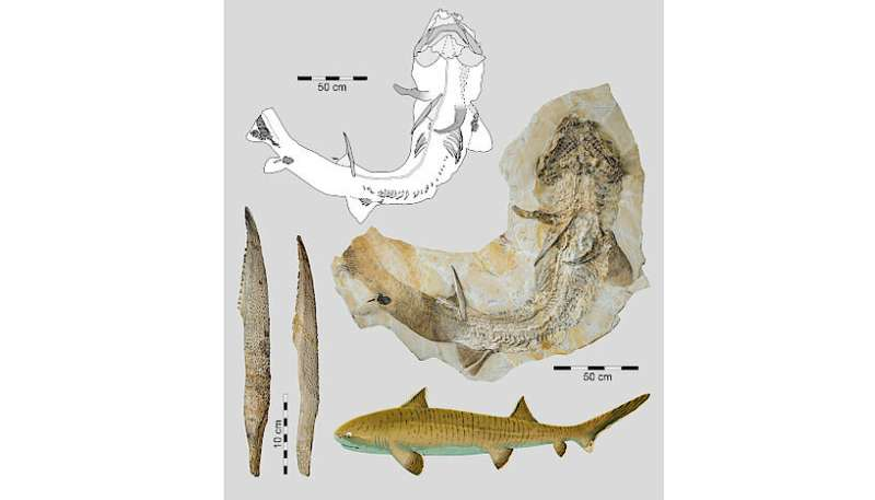 150-million-year-old shark was one of the largest of its time