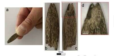 Ancient bone artefact found