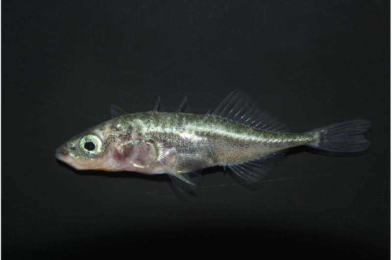 Ancient fish DNA provides a window back in time