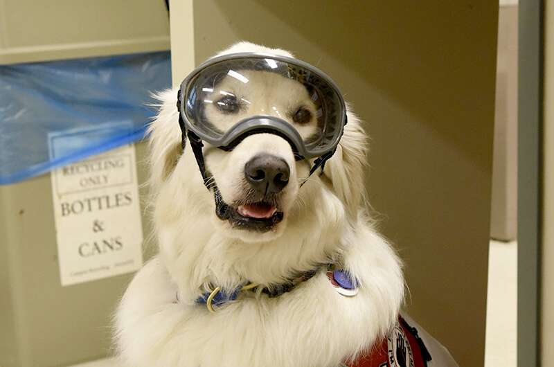 Are science laboratories truly inclusive if not accessible to service-dog handlers?