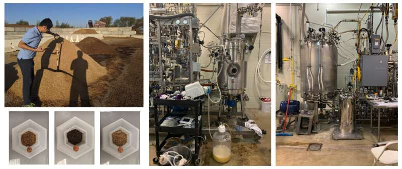 A simplified new process transforms wood waste from agriculture and forest management into ethanol