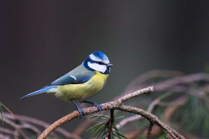 Birds' blood functions as heating system in winter