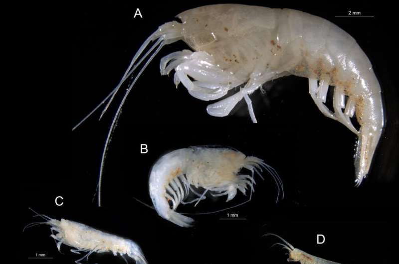 Blind shrimps, translucent snails: the 11 mysterious new species we found in potential fracking sites