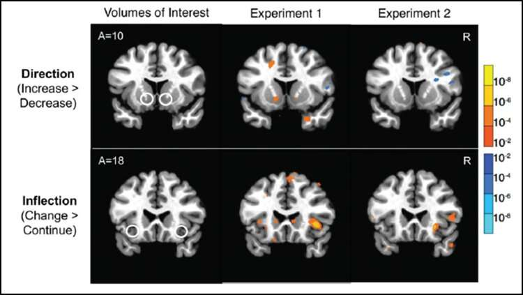 Brain activity foreshadows changes in stock prices