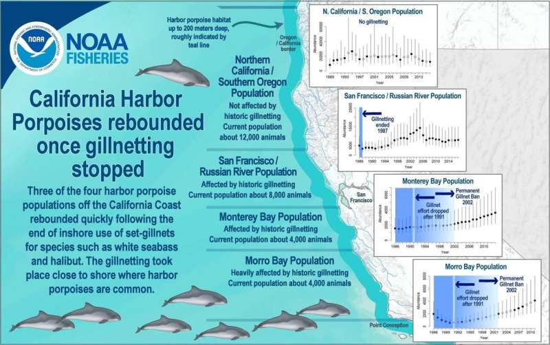 California harbor porpoises rebound after coastal gillnetting stopped