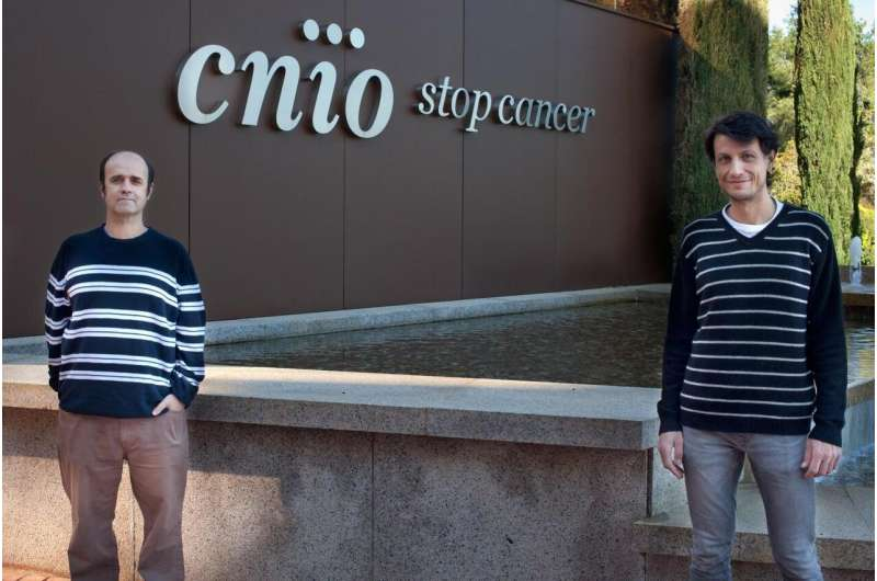 CNIO researchers explain the toxicity of USP7 inhibitors, under development for cancer treatment