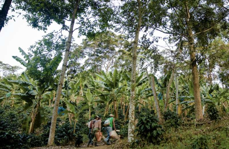 Coffee for the birds: connecting bird-watchers with shade-grown coffee