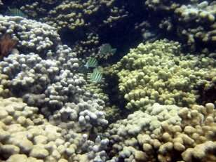 Coral decline -- is sunscreen a scapegoat?