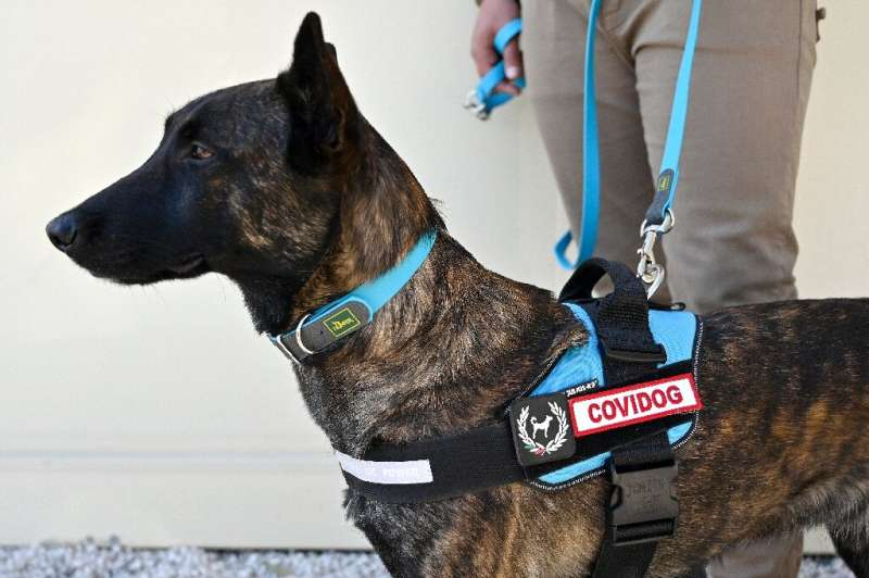 Coronavirus sniffer dogs sport a special patch on their harness
