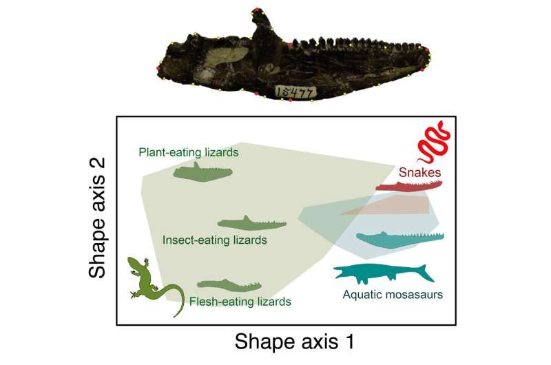 Cutting-edge analysis of prehistoric teeth sheds new light on the diets of lizards and snakes