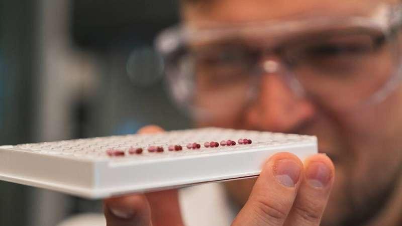 Developing new ways to diagnose preeclampsia