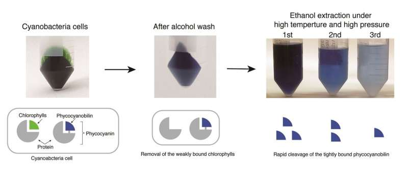 Development of rapid method for extraction of natural blue chromophore from cyanobacteria