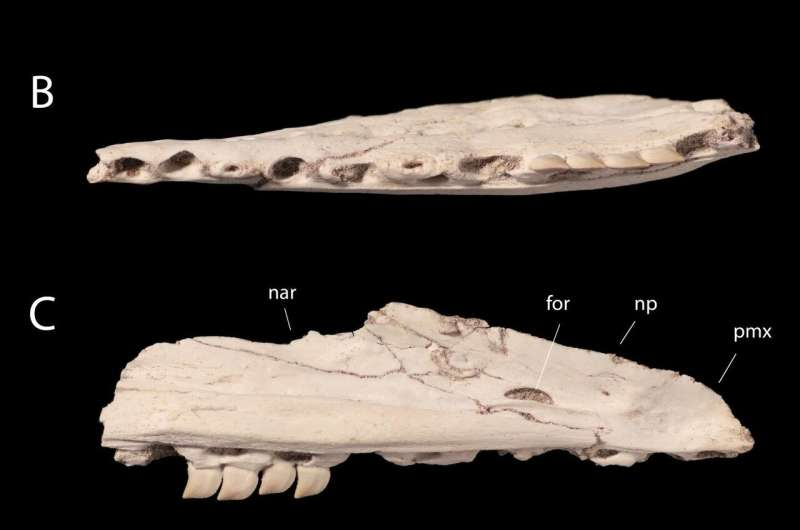 Dinosaur-era sea lizard had teeth like a shark