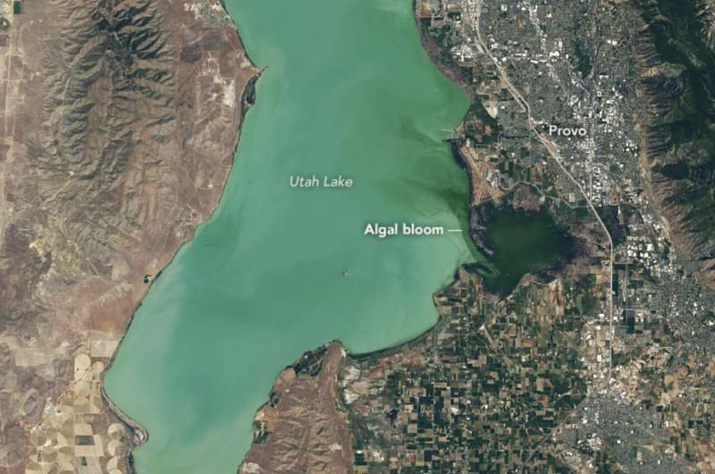 Downstream consequences: How NASA satellites track harmful algal blooms