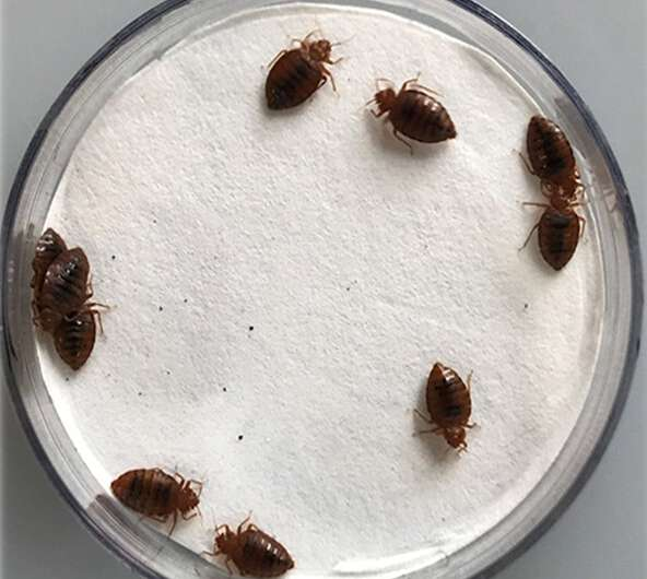 Essential oils restore insecticide effectiveness against bed bugs
