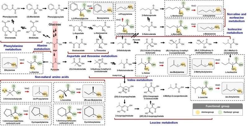 Expanding the biosynthetic pathway via retrobiosynthesis