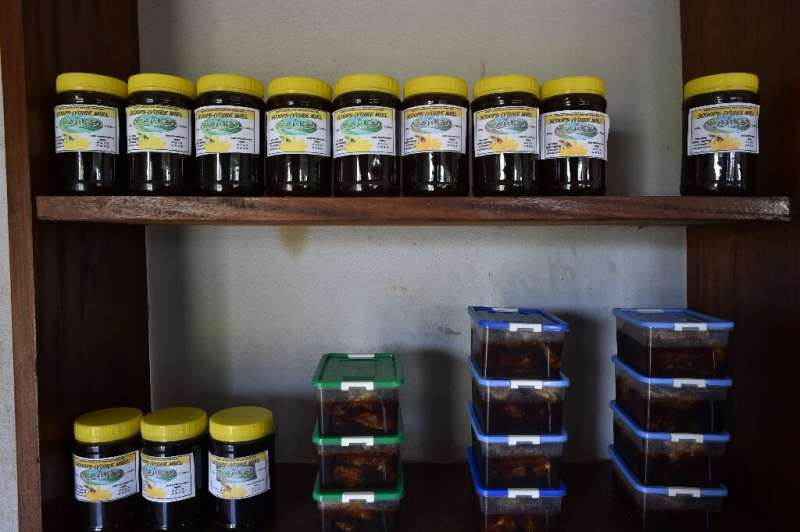 Experts say the outlook for beekeeping in Ivory Coast is promising—the country has a huge array of tropical flowers and trees to