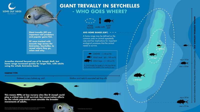 How can we conserve Seychelles giant trevallies?