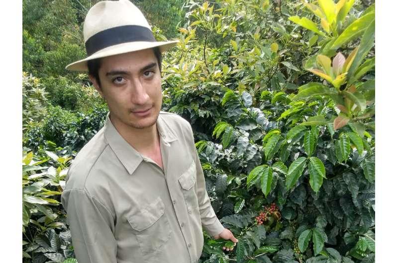 Cómo el cambio climático afecta la producción de café de Colombia