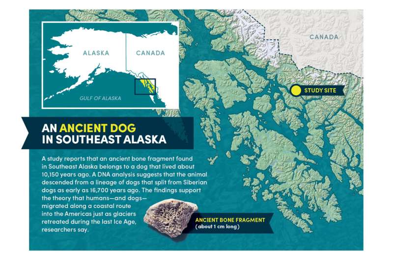 How did dogs get to the Americas? An ancient bone fragment holds clues
