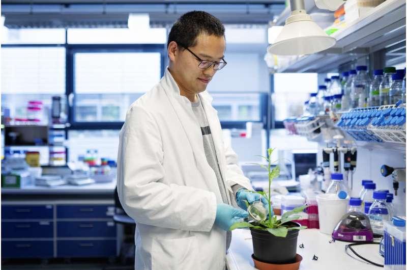 Cómo las plantas producen toxinas defensivas sin hacerse daño a sí mismas