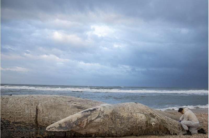 Israel shuts Mediterranean shore after oil devastates coast