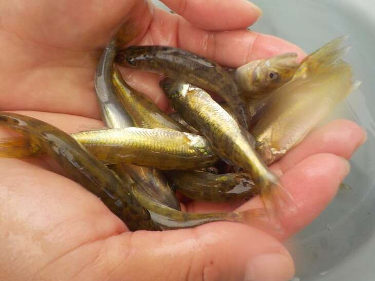 Lake turbidity mitigates impact of warming on walleyes in upper Midwest lakes