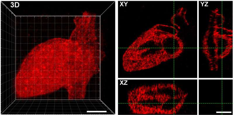 Lasers & molecular tethers create perfectly patterned platforms for tissue engineering