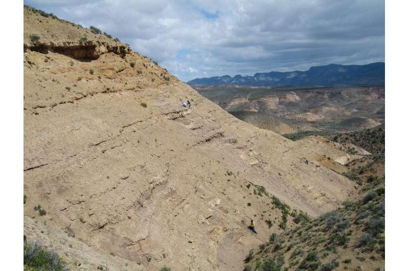 Leaf fossils show severe end-Cretaceous plant extinction in southern Argentina