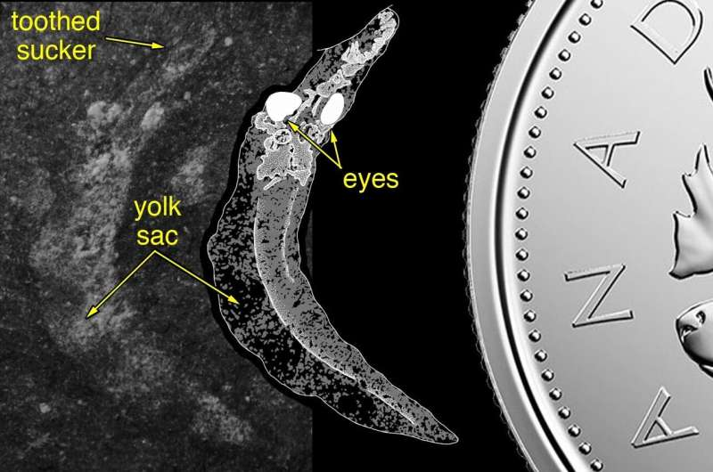 Long-accepted theory of vertebrate origin upended by fossilized fish larvae