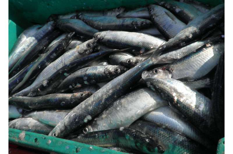 More management measures lead to healthier fish populations