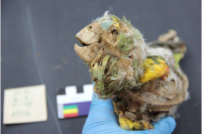 Mummified parrots point to trade in the ancient Atacama desert