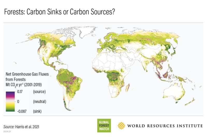 Los satélites de la NASA ayudan a cuantificar los impactos de los bosques en el presupuesto global de carbono